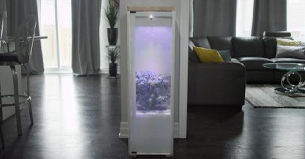 設計居家:Grobo 智慧菜園,在家裡用科技種菜