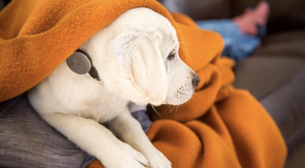 貓狗好物:狗兒專用的穿戴型裝置