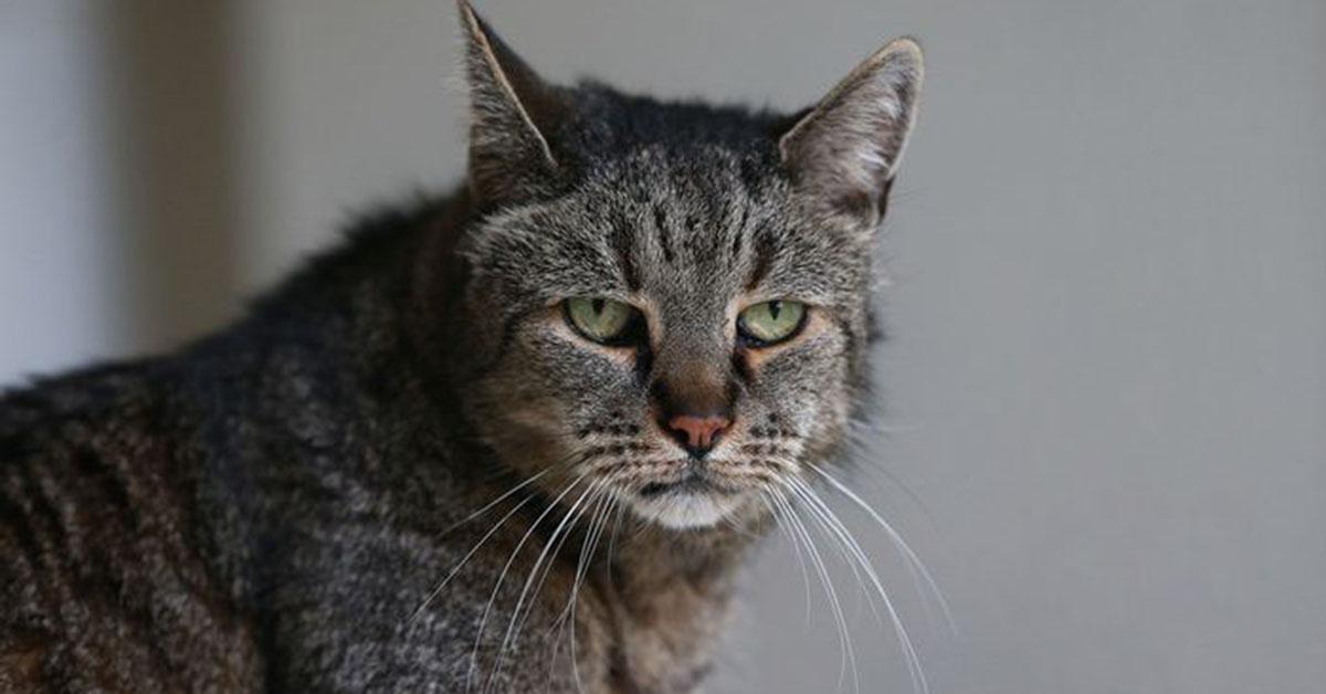 貓界的百歲「貓瑞」!到底為什麼貓可以活那麼久啊…