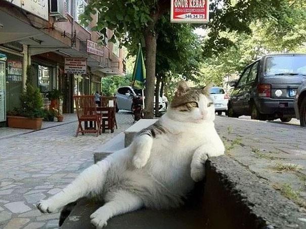 laid-back-cat-statue-tombili-istanbul-2