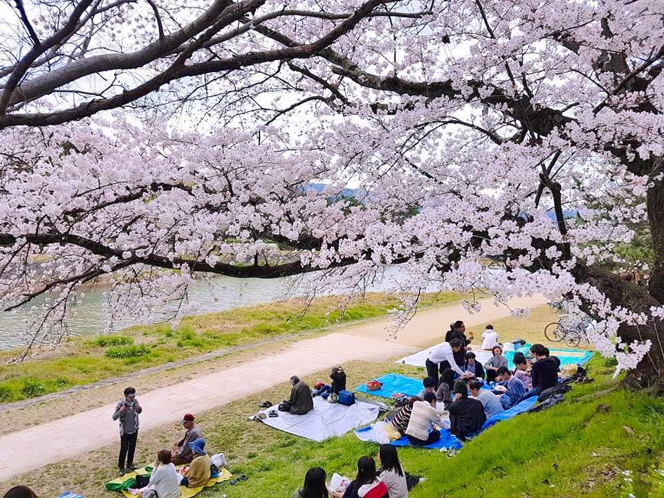 京都賞櫻最佳位置在哪?人潮少、花燦爛的好地方大公開!